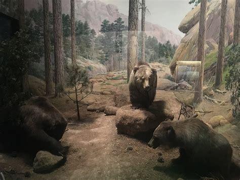 mexican grizzly bear wikipedia