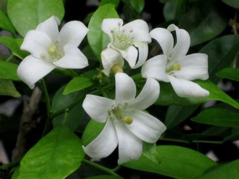 fragrant flowers good stuff 好介绍 171 addgrainonearth
