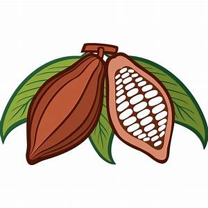 Cacao clipart bean seed - Pencil and in color cacao ...