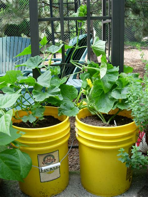 garden in a can gardening tip 2 gardening with containers
