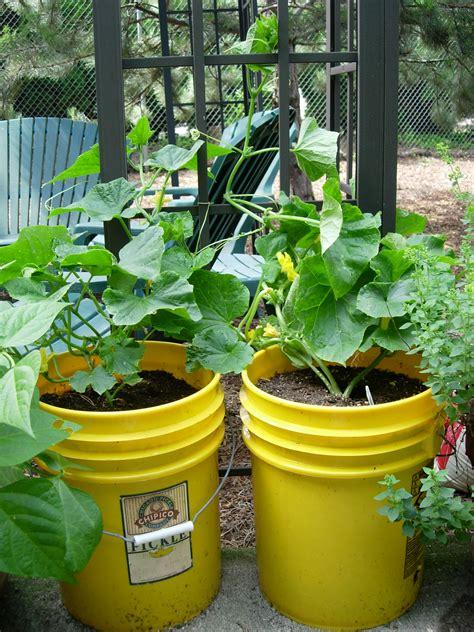 Apartment Gardening  Growinggardens' Blog