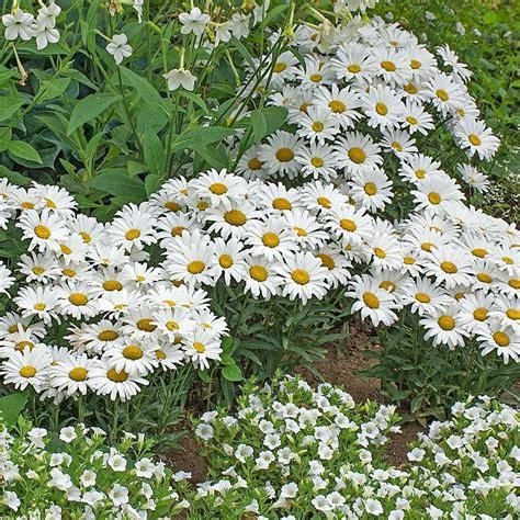 moon garden plants white flower farm