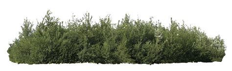 of bush bush png transparent bush png images pluspng