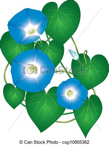 morning glories clipart clipground