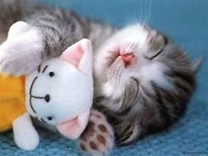 Meow~♥: sleeping beauty of a kitten