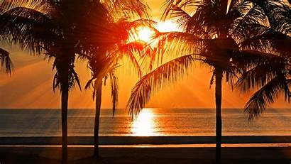 Sunset Palm Night Tree Vacation Caribbean Desktop