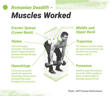 deadlift romanian muscles worked form lower deadlifts target erector spinae extension shoulder traps targets angle performance upper movements hamstrings glutes