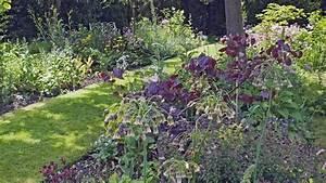 Pflanzen Für Schattige Plätze : schattenblumen diese pflanzen m gen schattige pl tze bayern 1 radio ~ Orissabook.com Haus und Dekorationen