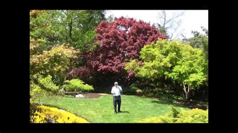 Best Trees For Small Garden Spaces