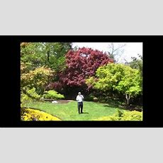 Best Trees For Small Garden Spaces  Japanese Maples Youtube