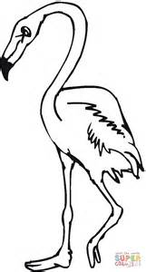 Flamingo Kleurplaat by Flamingo Bird Coloring Page Free Printable Coloring Pages