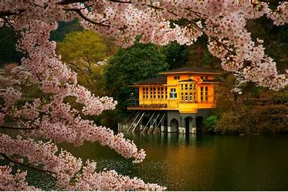Blossom Cherry Japan Spring Pink Nature Trees