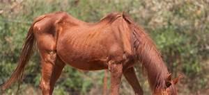 Bilder Von Pferden : wenn pferde abmagern dr susanne weyrauch ~ Frokenaadalensverden.com Haus und Dekorationen