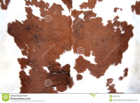 What Is Cowhide by Brown Cowhide Stock Image Image Of Decoration Farm