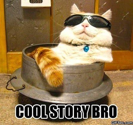 Cool Funny Memes - meme cool story bro jpg
