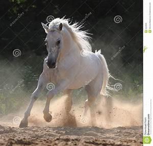 Au Cheval Blanc : galop de passages de cheval blanc image libre de droits image 9420696 ~ Markanthonyermac.com Haus und Dekorationen