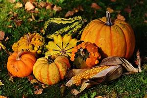 Kostenlose Bilder Herbst : kostenlose foto natur blume dekoration ernte produzieren herbst k rbis bunt jahreszeit ~ Yasmunasinghe.com Haus und Dekorationen
