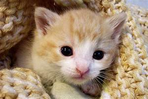Cats that are cute, cats pictures cute, cute names for ...  Cutest