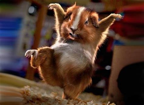 Best Animal Wallpapers For Desktop - 10 best images about animals on desktop