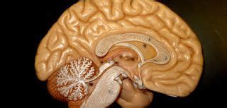 Parkinson's Information: Exploring current state of ...