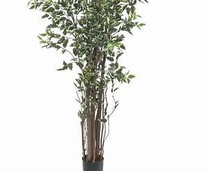 Ficus Benjamini Kaufen : kunstbaum ficus benjamini 1892 bl tter 240cm g nstig kaufen ~ A.2002-acura-tl-radio.info Haus und Dekorationen
