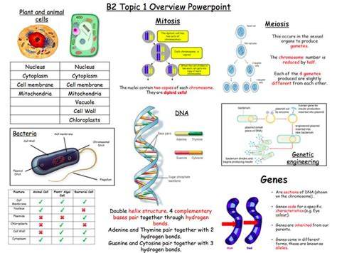 all worksheets 187 science worksheets ks4 printable