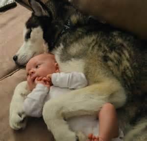 Dog Breeds Best for Babies