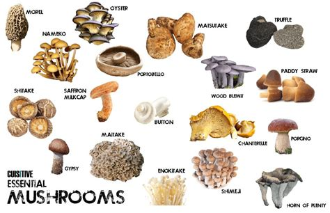 Types Of Edible Mushrooms With Pictures