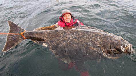 cucinare halibut l halibut 232 un pesce di mare da sempre considerato una