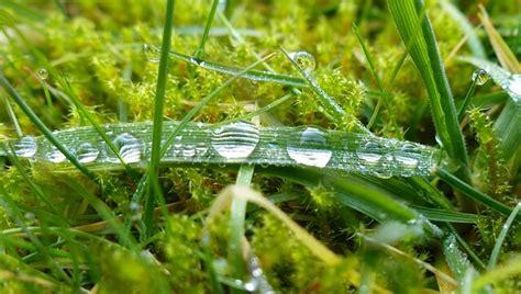 Pilze Im Garten Bodenbeschaffenheit by Rund Um Den Rasen Rasenpflege Im Garten Pflege Sorten