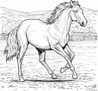 Horse Coloring Pages Galloping Printable