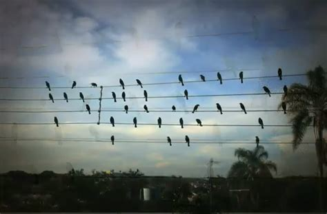 The composer said i knew it wasn't the most original idea in the universe. A man made a song using the exact location of these birds sitting on wires as musical notes