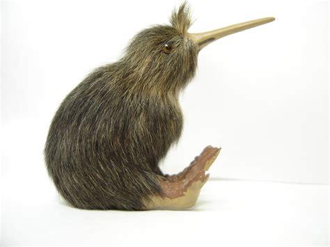 Free Kiwi 3 Stock Photo