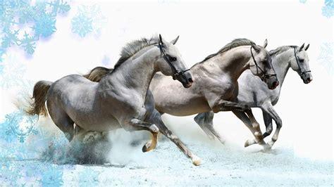 horses running horse wallpapers hd windows resolution desktop res wallpaperplay animal 4k wall themes wallpapersafari walls animals file