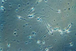Sperm Cell Tails Have Helix Structures  Could Help With