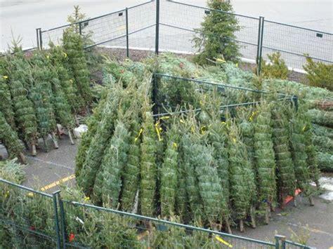 christmas tree sign up svef