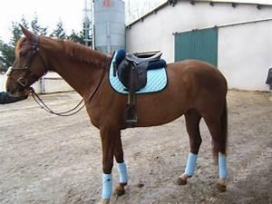 couleur tapis de selle pour alezan 2 forum cheval With quelle couleur va avec le gris 1 quelle couleur dequipement pour un cheval gris
