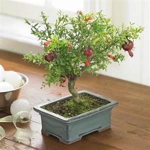 Bonsai Pflege Für Anfänger : bonsai baum pflege sorgen sie f r eine sch ne pflanze ~ Frokenaadalensverden.com Haus und Dekorationen