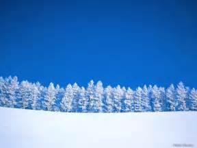 winter trees winter wallpaper 509498 fanpop