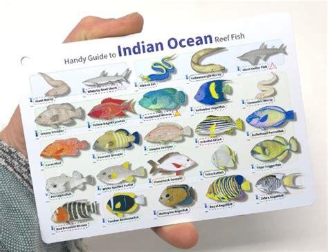 divelogs indian ocean reef fish id card