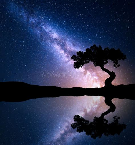 Night Scene With Milky Way And Old Tree Stock Photo