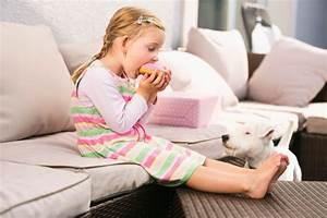 Prevent Dog Stealing Food | Dog Training Nation
