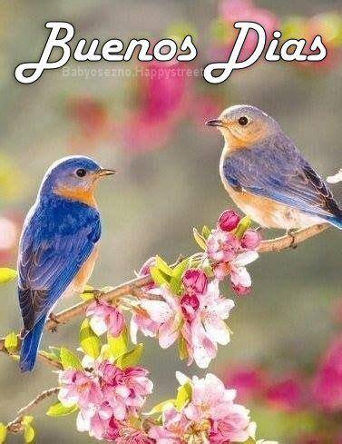 BUenos Dias Pájaros azules Feliz primavera Imagenes de