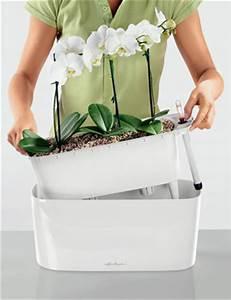 Grand Bac Pour Orchidées : tips en trucs voor de verzorging van orchidee n ~ Melissatoandfro.com Idées de Décoration