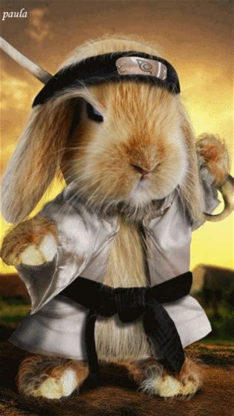 gifs animaux droles page  pet costumes cute animals