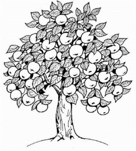 Malvorlagen Zum Ausdrucken Ausmalbilder Apfelbaum Kostenlos 2