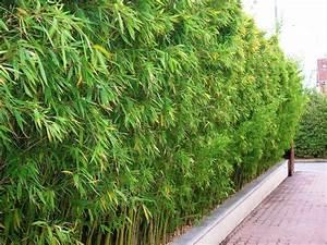 Bambou A Planter : bambous conception et am nagement de jardins jardins ~ Premium-room.com Idées de Décoration