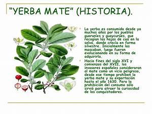 La Yerba Mate (Verdadero)
