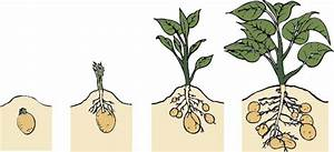 Grown Your Own Potatoes