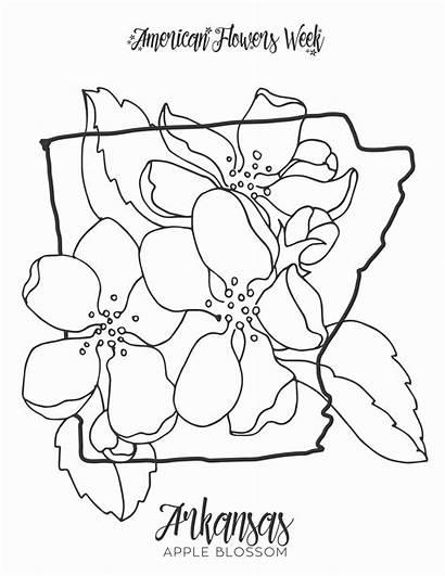 Coloring Flower Magnolia State Cherokee Gcssi Orange